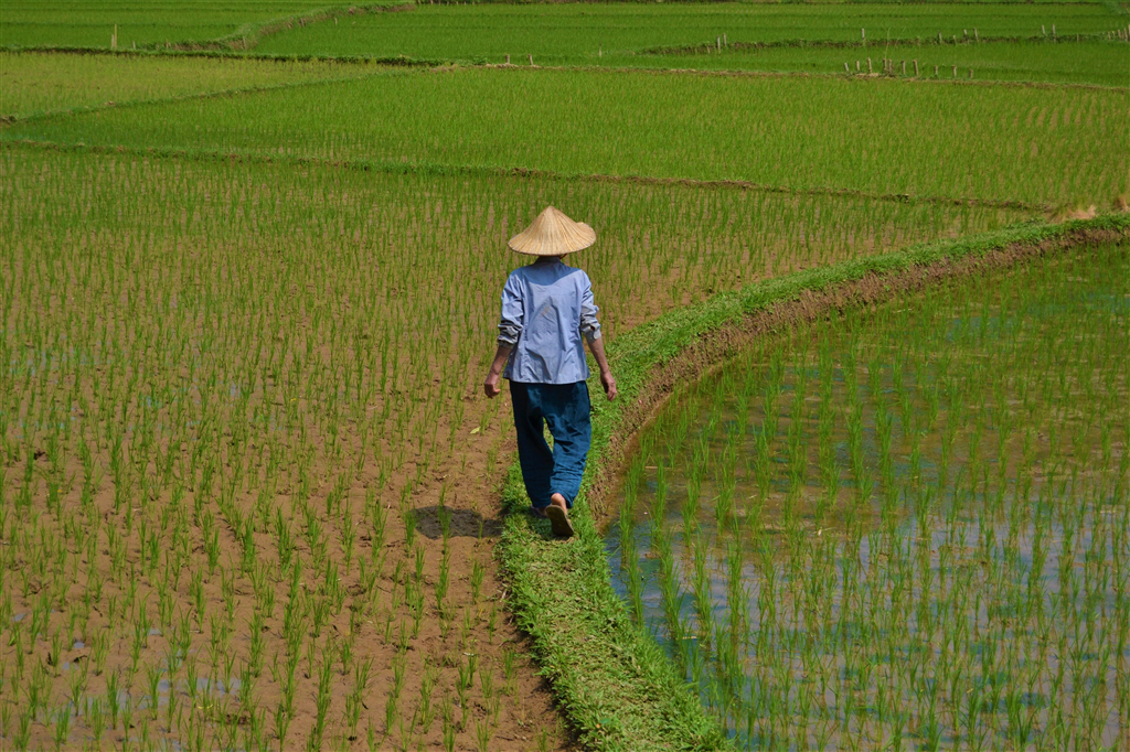 Between rice fields and rural villages: Mai Chau-Marsontheroad.com